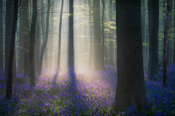 Misty Photograph - Velvet Light by Adrian Popan
