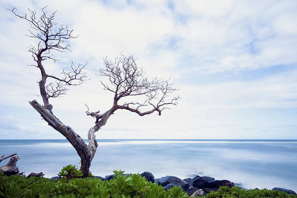 Wall Art - Photograph - Venerable Tree Looking by Ian Ludwig