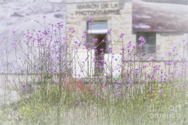 Photograph - Verbena Impressionism by Elaine Teague