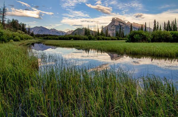 Wall Art - Photograph - Vermilion Lakes Marshland by James Wheeler