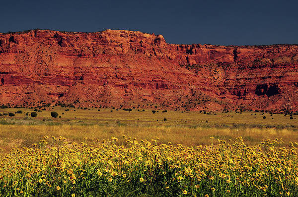 Vermilion Cliffs Wall Art - Photograph - Vermillion Cliffs And Field Of Yellow by Michel Hersen