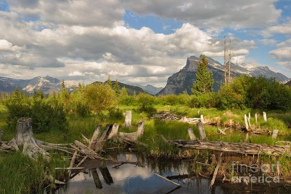 Photograph - Vermillion Stumps by Charles Kozierok