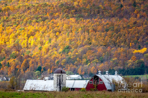 Photograph - Vermont Golden Wall  by Susan Cole Kelly