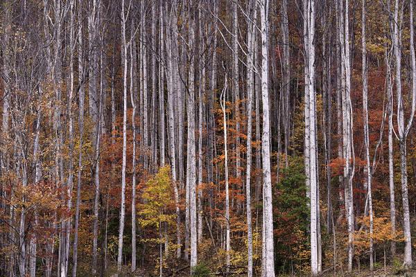 Photograph - Vertical Grays by David Waldrop