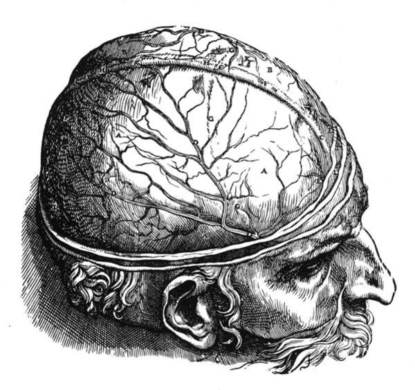 De Humani Corporis Fabrica Photograph - Vesalius: Brain by Granger
