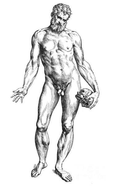 De Humani Corporis Fabrica Photograph - Vesalius: Male Nude by Granger