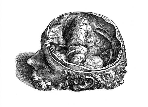 De Humani Corporis Fabrica Photograph - Vesalius: Olfactory Organs by Granger
