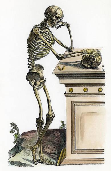 Photograph - Vesalius: Skeleton, 1543 by Granger