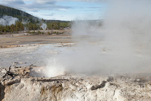 Photograph - Veteran Geyser In Norris Geyser Basin by Fred Stearns