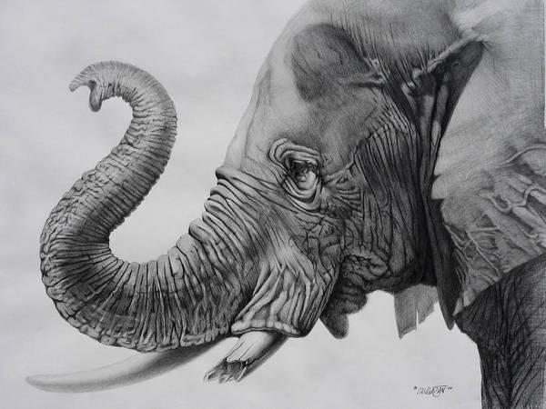 Wall Art - Drawing - Veteran by Tim Dangaran