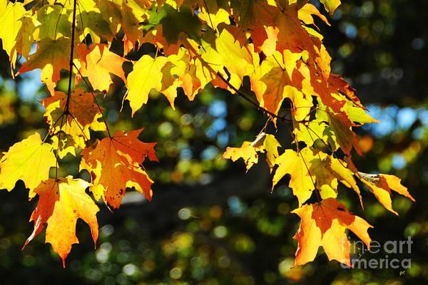 Photograph - Vibrant Autumn Colors by Gerlinde Keating - Galleria GK Keating Associates Inc
