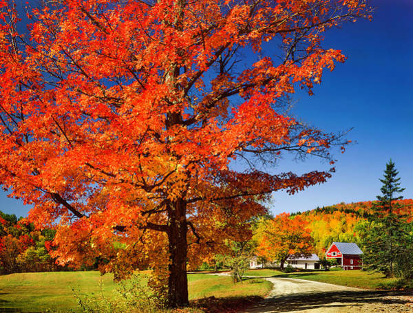 New England Autumn Photograph - Vibrant Autumn Maple Tree, Country Road by Dszc