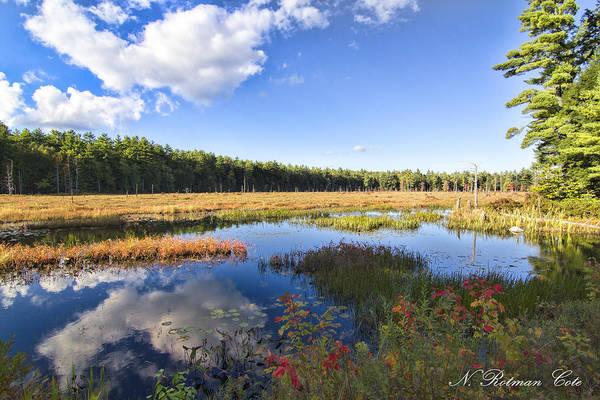 Photograph - Vibrant Fall Scene by Natalie Rotman Cote
