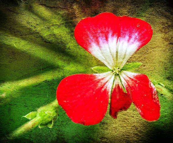 Photograph - Vibrant Petals by Barry Weiss
