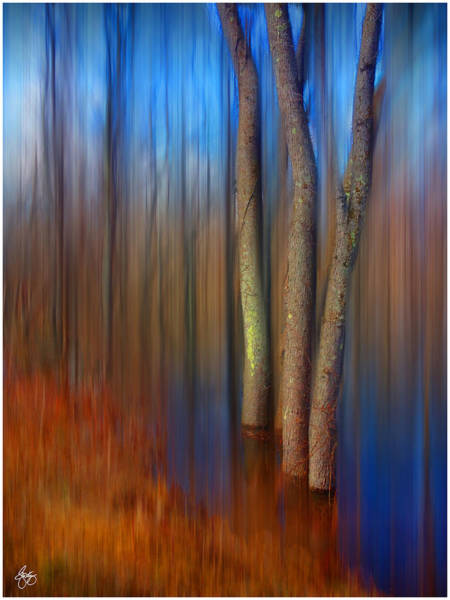 Photograph - Vibrant Reflections In A Floodplain Forest by Wayne King