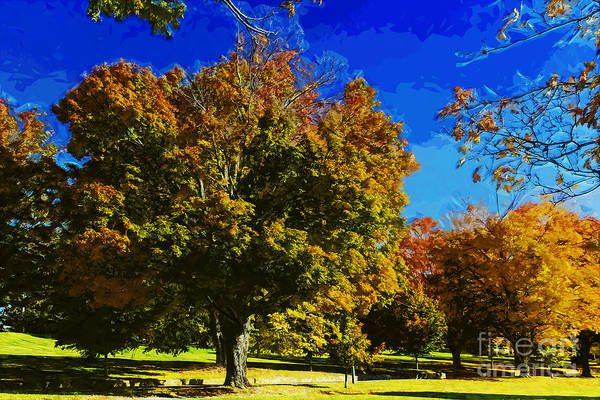 Acer Saccharum Photograph - Vibrant Sugar Maple Trees by Ules Barnwell