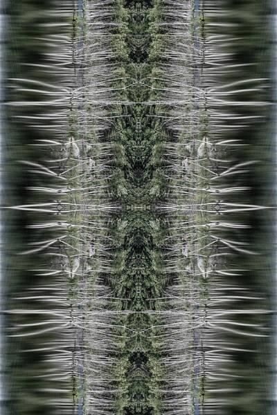 Photograph - Vibrations by Dawn J Benko