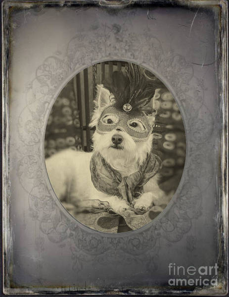 Photograph - Victorian Westie by Edward Fielding