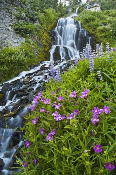 Vidae Falls And Flowers Art Print