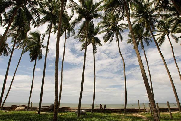 Yucca Palm Photograph - Vietnam by Sergi Reboredo