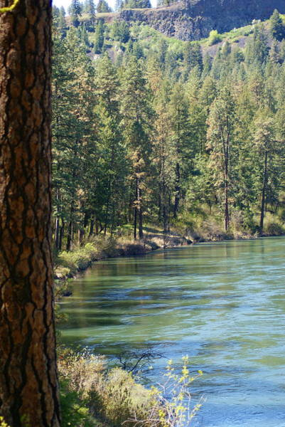 Photograph - View Along The Spokane River Spring 2014 by Ben Upham III