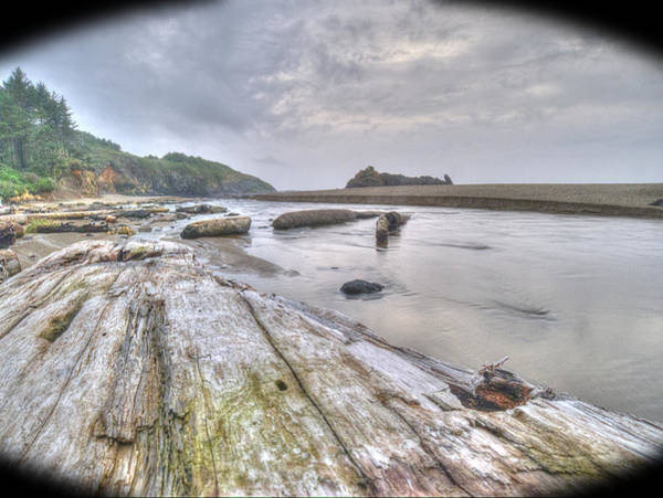 Photograph - View From A Log by HW Kateley