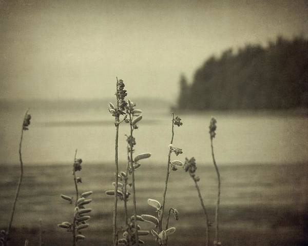 Photograph - View From The Shore by Patricia Strand