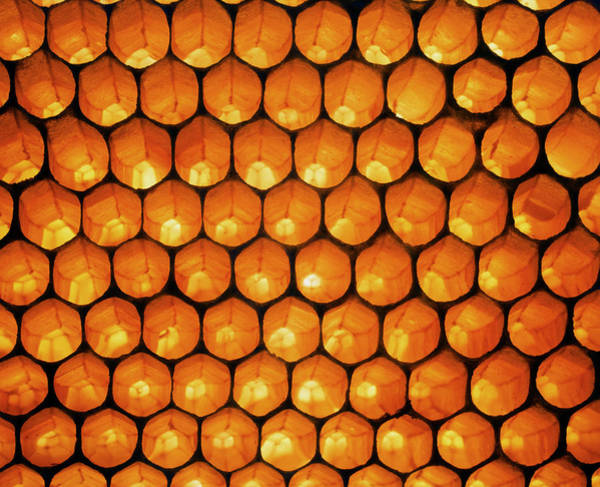 Honey Photograph - View Of Honeycomb Of The Honey Bee by Simon Fraser/science Photo Library