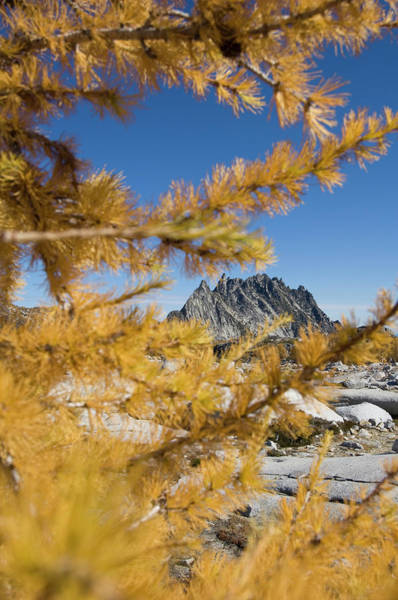 Wall Art - Photograph - View Of Prussik Peak Through Yellow by Frank Huster