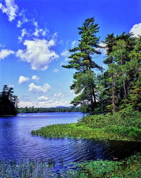 Adirondacks Photograph - View Of The Follensby Clear Pond by Panoramic Images