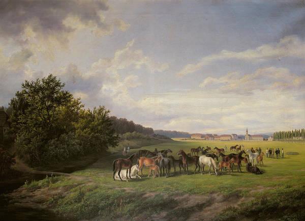 Foal Photograph - View Of The Kladrub Studfarm In Bohemia, 1850 by Anton Schiffer