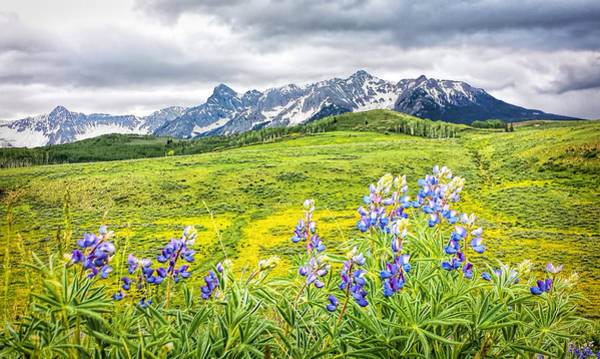 Photograph - View Through Lupines by Rick Wicker