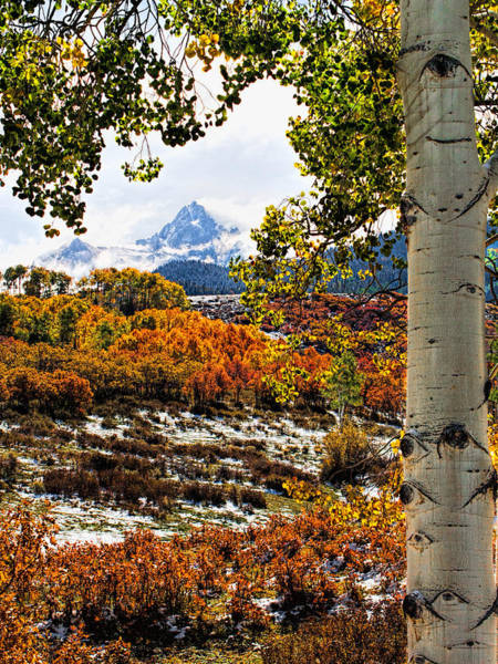 Photograph - Viewed Through The Aspen Leaves by Rick Wicker