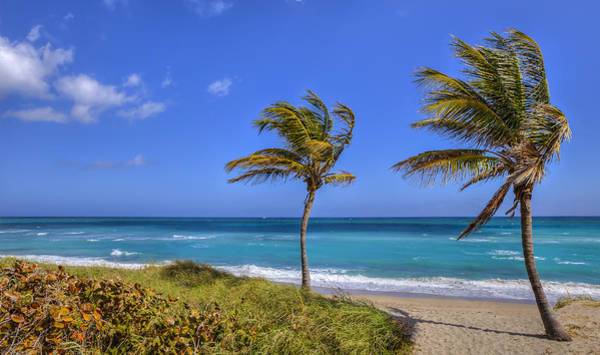 Photograph - Views Of Paradise by Sean Allen