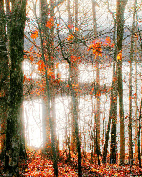 Photograph - Village Creek Dunn Lake by Lizi Beard-Ward