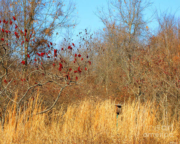 Photograph - Village Creek State Park Bird House by Lizi Beard-Ward