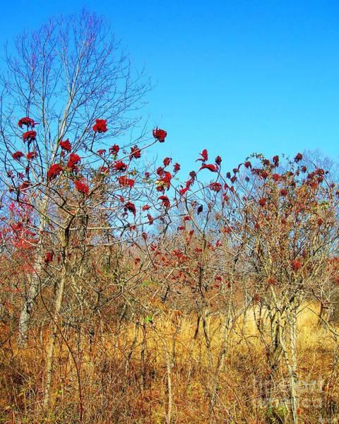 Photograph - Village Creek State Park Sumac  by Lizi Beard-Ward