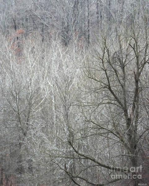 Photograph - Village Creek Winter Forest 1 by Lizi Beard-Ward