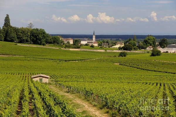 Burgundy Photograph - Village Of Aloxe Corton. Cote D'or. Burgundy. France by Bernard Jaubert