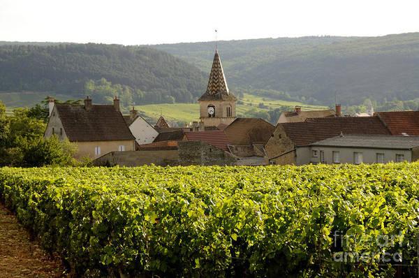 Grapevine Photograph - Village Of Monthelie. Burgundy. France by Bernard Jaubert