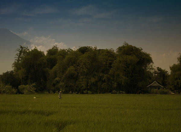 Photograph - Village Rice Fields by Miguel Winterpacht