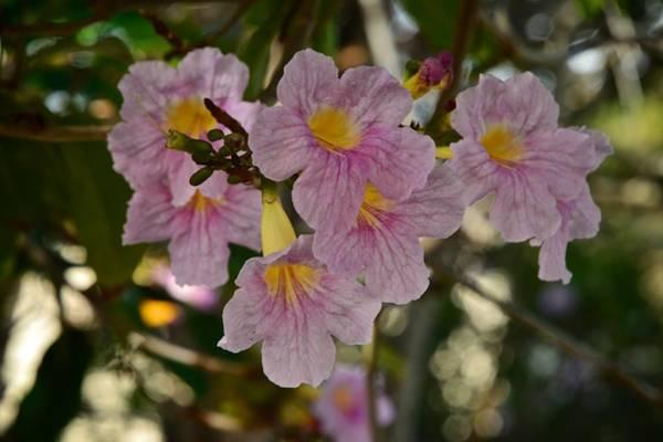 Photograph - Villalba Flowers by Ricardo J Ruiz de Porras