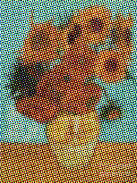 Photograph - Vincent Van Gogh Sunflowers 2.0 - V1 by Edward Fielding