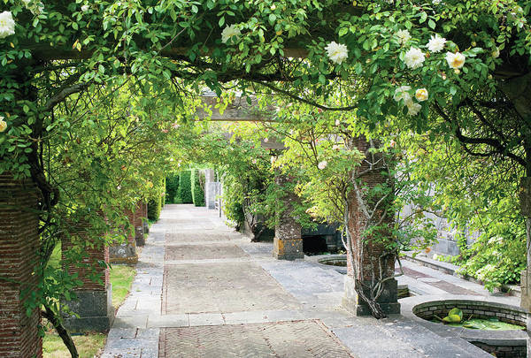 No People Photograph - Vine Covered Columns And  Garden Path by Tim Beddow