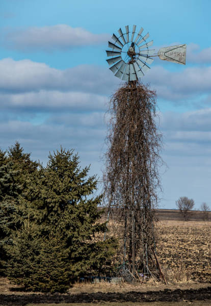 Wall Art - Photograph - Vine Covered Windmill by Paul Freidlund