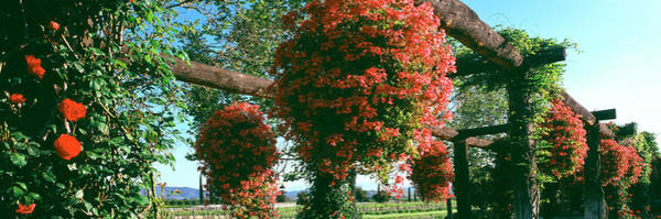 Riverside California Photograph - Vine Roses And Potted Geraniums Add by Panoramic Images