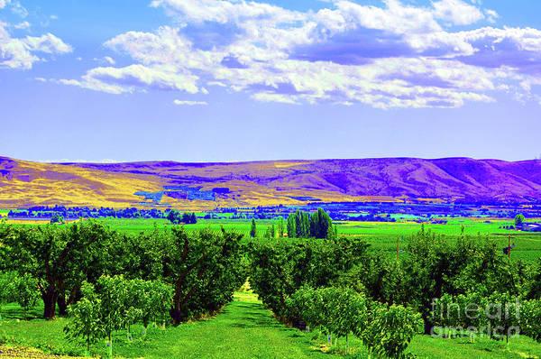Orchard Digital Art - Vinehart by Molly McPherson