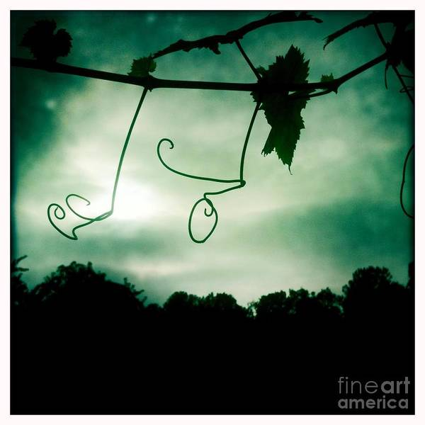 Photograph - Vines by Denise Railey