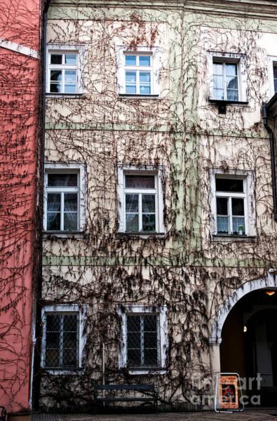 Wall Art - Photograph - Vines In Prague by John Rizzuto