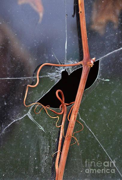 Wall Art - Photograph - Vines On Broken Window by Jill Battaglia